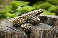 Taran Pinecone Decor