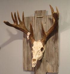 20 Ways to Turn Old Racks into Incredible Antler Art - Wide Open Spaces Deer Skulls, Cow Skull, Animal Skulls, Deer Antlers, Deer Mount Decor, Deer Decor, Wall Decor, Antler Crafts, Antler Art