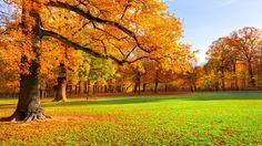 Autumn Scenery Wallpaper Hd Picture Gallery - ImageFiesta.com