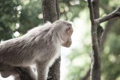 who woke me up... by Ramamoorthy Kumar on 500px