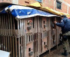 JORNAL O RESUMO: Polícia descobre rinha de galos em Cabo Frio e det...