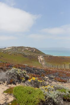 Fort Ord Dunes near Monterey, California