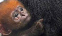 SF Giants' lucky charm is a monkey - News - Bubblews