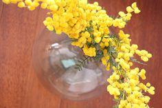 Jarrón con mimosa amarilla