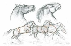 How to Draw Horses with Eva Dutton | Features | Painters Online