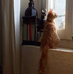 Greta romantica osserva la pioggia.