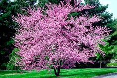 Best Types of Landscaping Trees Designs Ideas Pictures