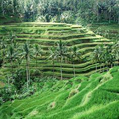 The Elysian—Bali, Indonesia. #Jetsetter