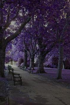 Jardim roxo por MyohoDane