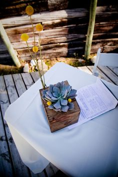 succulent and billy button centerpiece