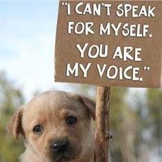 Fight against Animal Cruelty......So sad when anyone mistreats an animal....we are thier voices and have to speak for them..can't stand the thought of any animal being mistreated,,they don't deserve it....they are God's creatures and we are to take care of them and love them......they are so precious......