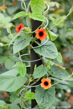 Discover ways to bring height and color to your garden by following these brilliant projects demonstrating how to grow flowering vines in the shade or the sun.