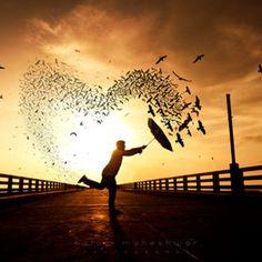 bird #heart