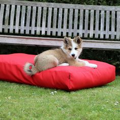 Since Suzy's is specialised in handmade products for dogs. We stand out with exclusive designs and exceptional quality. Designer Dog Carriers, Dog Cushions, Cushion Filling, Mattress Covers, Sunbrella Fabric, Dog Design, Summer Vibes, Bean Bag Chair, Blanket