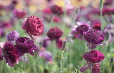 Gorgeous flowers of the field ♥ Прекрасните полета с цветя | 79 ideas