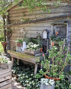 🌸🍃🌸🇬🇧 It's getting greener and greener behind the potting shed😊🍃🌿We had a frosty night but I tried to minimize damages by covering my… Farm Gardens, Small Gardens, Outdoor Gardens, Garden Cottage, Garden Pots, Garden Crafts, Garden Projects, Patio Plants, Garden Styles