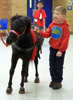 A Special Boy and His Miniature Horse