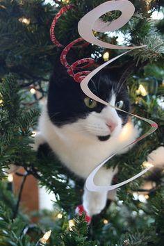 cats + Christmas trees + fun!
