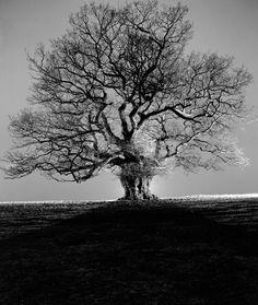 George Wright - Night Oak 1 on www.eyestorm.com