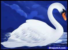 How to draw a beautiful swan - Hundreds of drawing tuts on this site