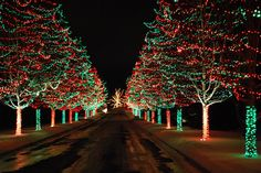 Welcome the festive season of Christmas with beautiful Christmas Outdoor Decor Ideas. From gleaming Christmas lights to outdoor Christmas trees & more. Diy Christmas Lights, Christmas Light Displays, Xmas Lights, Decorating With Christmas Lights, Outdoor Christmas Decorations, Holiday Lights, Winter Christmas, Christmas Trees, Zoo Lights