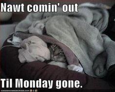 Monday Moods