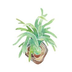 Staghorn Fern Print 11x17 13x19 Archival Quality Watercolor Giclee - Green Epiphyte Plant Art - Minimalist Modern Plant Prints