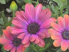 Fabulous Flowers Art Print