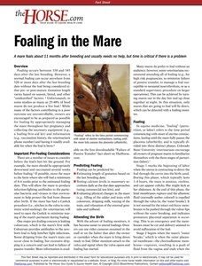 The Horse | Foaling | TheHorse.com