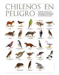 Nature Animals, Animals And Pets, Mundo Animal, Drawing Clothes, Natural History, South America, Zine, Flora, Creatures
