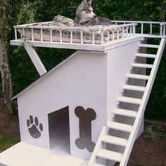 My dog - and probably my cats too, would LOVE this house!