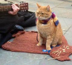 Street cat Bob....xx