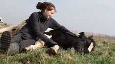 Fiete, he was rescued from slaughter and lives on a sanctuary in Germany