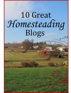 TOP HOMESTEADING BLOGS: Looking to check out some outstanding homesteading and backyard farming blogs? Here's an excellent collection, compiled by Sovereign Survival.