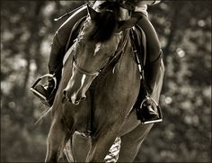 Lisa Cueman Photography. Canter. http://www.oughtonlimited.com/studio-notebook/equine-fine-art-photography