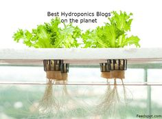Have you heard about deep water culture for plants?s also referred to as hydroponics. Maybe you have a gist of what it is and how it can be used but, really, what is deep water hydroponics? This article will explain more. Indoor Vegetable Gardening, Container Gardening, Gardening Tips, Gardening Supplies, Hydroponic Farming, Hydroponics System, Diy Hydroponics, Hydroponic Lights, Hydroponic Equipment