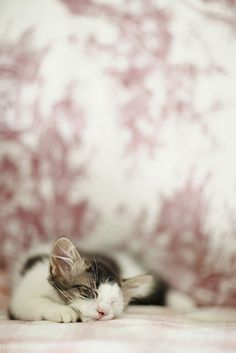 ........ | Flickr - Photo Sharing!