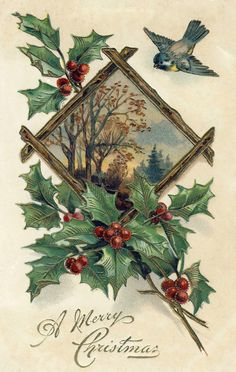 vintage Christmas postcard with bluebird and holly leaves