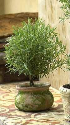 Rosemary Topiary Tutorial - how to plant, prune & stake a plant.....