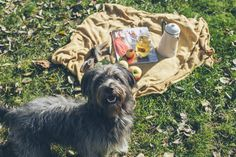www.rogidogi.com #rogidogi #dog #antlerchews #dogchew #pies #gryzak #piesel