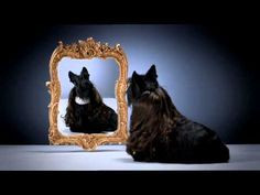 Oh, this makes me SQUUUEEEEW!  How cute is this Chum Dog food commercial?  Tis bonny,aye?!
