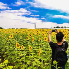 If you're looking for the ultimate summer activity, you should visit Bogle Seeds, a picturesque sunflower farm that's in Hamilton. Natural Playground, Sunflower Fields, City Girl, Summer Activities, The Great Outdoors, Paths, Toronto, Waterfall, Seeds