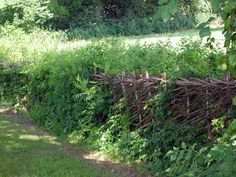 hedgerow management - laid hedge for livestock security