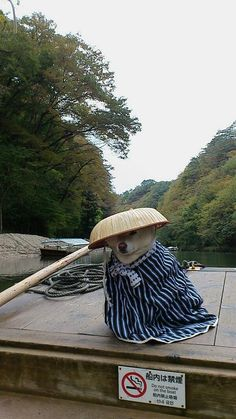 Shiba on an old Japanese style boat. Animals And Pets, Baby Animals, Funny Animals, Cute Animals, Pet Dogs, Dogs And Puppies, Dog Cat, Shiba Inu Doge, Japanese Dogs