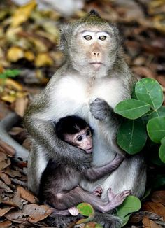 Welcome to the jungle! A monkey embraces its cub in Tay Ninh province in Vietnam, 62 miles from Ho Chi Minh city.