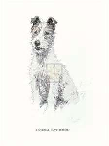 CECIL ALDIN TERRIER - Search