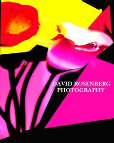 Flowers; original abstract photography by David Rosenberg by ArtBySarahHinnant on Etsy