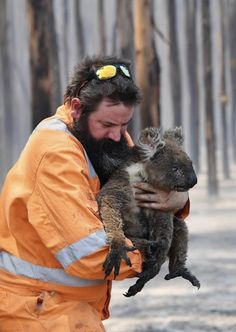 Save Animals, Cute Baby Animals, Funny Animals, Beautiful Creatures, Animals Beautiful, Koala Bears, Australian Animals, Animal Kingdom, Fur Babies