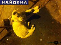 Найдена собака кобель г.Тверь http://poiskzoo.ru/board/read31123.html  POISKZOO.RU/31123 Бегает кобель в райне .. дома по .. лет лектября, спокойный, знает некоторые команды. Похож на Лабрадора. Пристроить нет возможности, оставлю только переночевать. Срочно ищем хозяев. В помещении не уютно себя чувствует, возможно из частного сектора. Помогите кто-нибудь. Очень жалко пса. Возьмите потеряшку ...  РЕПОСТ! @POISKZOO2 #POISKZOO.RU #Найдена #собака #Найдена_собака #НайденаСобака #Тверь
