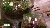 Martha and Tovah Martin make beautiful terrariums and offer care tips.